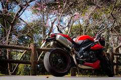 IMG_2415 (HoragamePhoto) Tags: sakura speedtriple