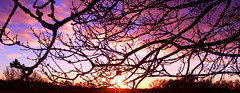 Sunset (vibeke2620) Tags: sunset outdoor clouds colours nature winter pink afternoon sun magenta denmark january silhouettes branches trees warmcolours sunsetting