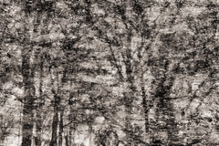 Puddles (Multiple Exposure) 91 (pni) Tags: monochrome tree reflection ice water puddle multiexposure multipleexposure tripleexposure lapinlahti lappviken helsinki helsingfors finland suomi pekkanikrus skrubu pni