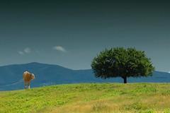 simplicity (Robin.Benea) Tags: nature beautiful landscape cow interesting fuji simplicity romania fujifilm x20 groseni esenciadelanaturaleza