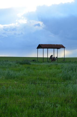 Inner Mongolia: Camel Herding