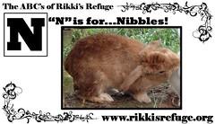 nibbles (rikkis_refuge) Tags: rabbit bunny bunnies rabbits nibbles rikkisrefuge