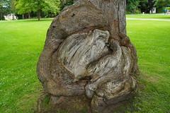 Serpent tree trunk. (artanglerPD) Tags: tree trunk strangled twisted highlandbreak