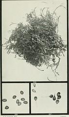 Anglų lietuvių žodynas. Žodis catjang pea reiškia catjang žirnių lietuviškai.