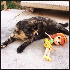 Omg! There's been a Tallulah sighting! Paparazzi cameras out! Now! (She knocked over Neroli after some canoodling. Apparently not her favorite Blythe.) Sorry, Tallulah!