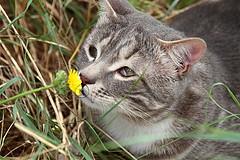 il mio gatto Cucciolo (lucia lf@@) Tags: pet animal cat canon country campagna felino toscana gatto giardino maremma animalidacompagnia
