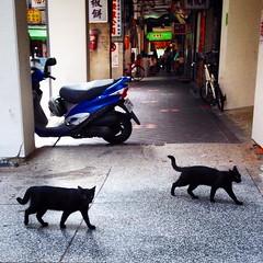 台北 / Taipei - 華陰街 (Blowing Puffer Fish) Tags: street black cat square squareformat taipei 台北 貓 黑貓 iphoneography instagramapp uploaded:by=instagram