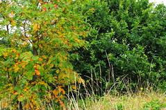 DSC_3204 (Piyushgiri Revagar) Tags: minet country park hayes hillingdon countryside conservation nature wildlife trust reserves green greenery landscape photography photo photograph closeup background beautiful wow nice by akruti nikon piyushgiri revagar kruti 22