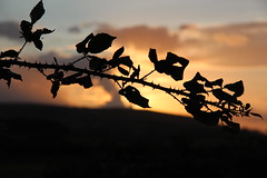 365 - 2014 - Day 224 (Mark Brocklehurst) Tags: sunset silhouette canon eos sussex august upper prick 365 thorns 2014 project365 beeding 365days 650d