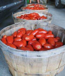 tomato time 08222014 (2)