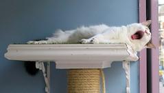 London'14 (281) (Silvia Inacio) Tags: uk england cats london coffee gatos shoreditch londres gata artemis catemporium