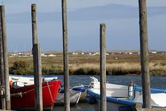 _MG_0033 (_ _steven.kemp_ _) Tags: beach coast norfolk seals blakeney morstonquay