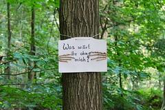 Baumbotschaft im Wildenloher Wald (Greenpeace Oldenburg) Tags: greenpeace wald ferien oldenburg tier kleine challange schatzsuche detektive wildenloh kinderferienspass kinderferienpass becherlupen baumbotschaften