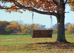 Tree Swing (Sarah Hina) Tags: tree swing porch