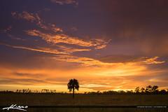 Florida Landscape Beautiful Sky on Fire (Captain Kimo) Tags: florida wetlands everglades jupiter topaz palmbeachcounty photomatixpro hdrphotography floridalandscape pinegladesnaturalarea captainkimo