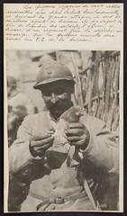 1A1182101_283348III029 (Universit de Caen Normandie) Tags: pigeon wwi worldwari worldwarone greatwar firstworldwar homingpigeon thegreatwar premireguerremondiale grandeguerre pigeonvoyageur 1gm