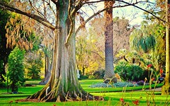 The Tree (Art & Photography by Michellea Sefton) Tags: trees reflection nature garden relaxing relaxation botanicalgardens albury