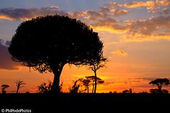 cactus sunset (PhilHydePhotos) Tags: africa tanzania safari tarangirenationalpark
