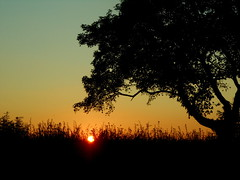 2014-09-07 18.32.14-1 (Nibbler1977) Tags: trees sunset sun tree silhouette set silhouettes glowing setting
