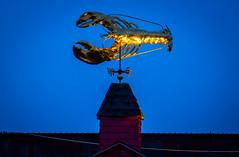 James Hook Co. Lobster (TomBerrigan) Tags: boston james golden lobster hook seaport