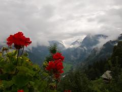 Braunwald - immer schn (oskar.guenther) Tags: wolken braunwald geranien tiefblick