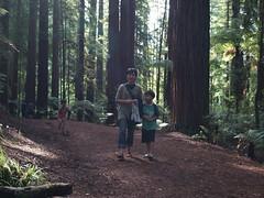 NZ Redwoods (dam.dong) Tags: travel nz redwoods min yuni e500