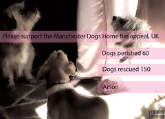 Terrible Fire at Dog Rescue Center (Cheese Mouse) Tags: life family friends food rescue dog cats pets love home dogs water animals wonder manchester fun happy fire hope amazing play vet report kittens foster help enjoy lucky future trust feed passport shelter shocking microchip donate rspca survive cruel 2014 reciprocal premote