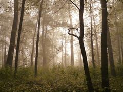 reach (wood_owl) Tags: morning trees light ohio mist nature fog forest dawn september reach thesun cuyahogavalleynationalpark icouldtouch almostithought