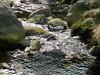 Brook (Ellifr19) Tags: nature river landscape yorkshire 2012