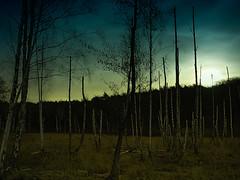 Dead birch tress in the light of the rising moon (Steppenwolf33) Tags: sky moonrise mondaufgang birken birch trees bäume steppenwolf33
