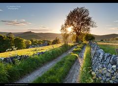 Summer Walk (Steve-P2010) Tags: sunset sunlight evening path derbyshire peakdistrict drystonewall starburst lonetree whitepeak steveprice leadin