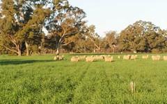 796 Fellow Hills Road, Holbrook NSW