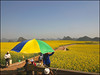 Colza (Christian Lagat) Tags: china flowers yellow fleurs jaune champs hats hills parasol chapeaux fields 中国 yunnan chine rapeseed collines colza 云南 luoping 罗平 sonynex6