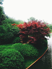 The Japanese Garden (HannahsPhotographie) Tags: red sky plants lake plant tree green water june garden landscape botanical japanesegarden spring maple bush overcast olympus japanesemaple greenery shrub botanicalgarden redandgreen 2014 schrub olympusepl1 olympuspenepl1