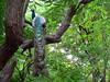 Beauty ! (SANAND K) Tags: beauty feathers peacock tamilnadu mayilpeeli ttdc sanandkarun sanandkarunakaran