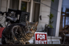 Cat - For Rent (M$ingh.) Tags: ohio house cat evening town expression streetphotography athens front porch curious signboard neighbourhood forrent athensohio nikond7100