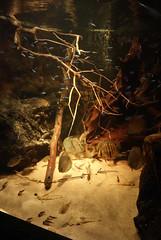 Korkeasaari (Windsrock) Tags: korkeasaari neontetra akvaario kaloja