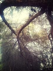living dream (tristenaquino) Tags: forest backyard hidden ghosts flickrandroidapp:filter=mammoth