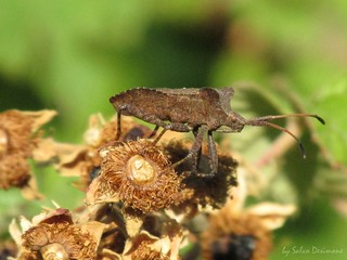 Insetto - insect
