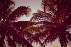 miami palm trees 1 (ashlyn.maria) Tags: ocean blue trees red sea brown seagulls white tree green bird feet beach water up birds palms eyes open close miami seagull gull gulls flock gray beak feathers tan palm clear foam bubble tropical mouths lots bubbly claws seafoam beaks