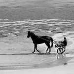 Horse and buggy at Omaha beach thumbnail