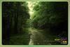 Silent Valley---------------07 (Binoy Marickal) Tags: india green tourism nature water rain kerala mala palakkad evergreenforest treaking silentvalleynationalpark nilgirihills mannarkkad mukkali kuzhur indiabinoymarickal