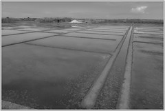 Marais salants Guérande (philippe sauvaget) Tags: white black nature noir histoire sel paysage marais blanc guerande