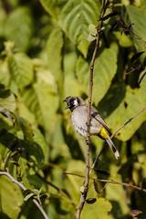 IMG_3935 (gaujourfrancoise) Tags: voyage travel india nature birds animals asia asie animaux oiseaux inde gaujour