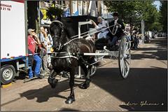 ringrijden visserijdagen 2014 met de friesesjees (<<<< peter ijdema >>>>) Tags: horse pentax sigma fries harlingen horseriding klederdracht voorstraat paard origineel frisian sjees visserijdagen