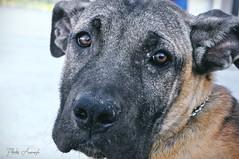 (Rita Muratori) Tags: dog brick cane puppy nose photography photo eyes nikon foto ears occhi fotografia cucciolo naso 18105 d90 orecchie mattone