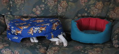 665 - Caprichos de mascotas (esnalar) Tags: gatos felinos mascotas sx50hscanon