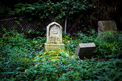 Abandoned Jewish Graveyard - Youngston (Stephen Poullas) Tags: old boy grave grass yellow 4 year front creepy