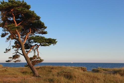20140719 20-00-38 Schweden 572