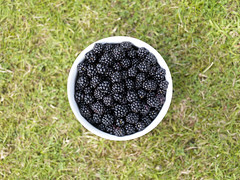 Blackberries (Crausby) Tags: uk fruit bowl hasselblad cumbria blackberries